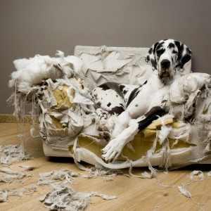couch oder sessel für hunde